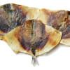 Лещ бабочка Пивная лавка